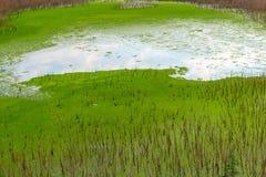 O pântano com reflexão do céu azul Fotos de Stock Royalty Free