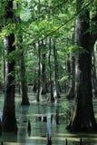 O pântano de Cypress: Imagem de Stock