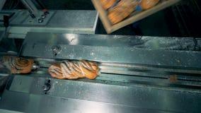 O pão doce coberto com as sementes e o açúcar de papoila obtém descarregado em uma máquina de embalagem 4K video estoque