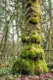 O pé do ` s da árvore Imagem de Stock