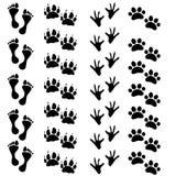 O pé imprime o cão humano do gato da pata da galinha Fotografia de Stock