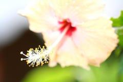 O pólen branco e amarelo da flor foto de stock royalty free
