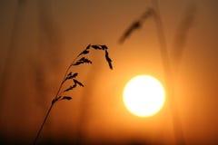 O pôr-do-sol. foto de stock