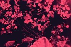 O p?ssaro da ?rvore e as pinturas bonitos da arte das flores colorem o rosa e fundo e papel de parede pretos do teste padr?o da i ilustração royalty free