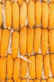 O pacote secado amarelo do milho texture junto o fundo Imagem de Stock Royalty Free