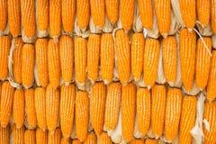 O pacote secado amarelo do milho texture junto o fundo Foto de Stock Royalty Free