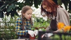 O pai e a criança nos aventais estão cultivando o solo em uns potenciômetros da planta com ferramentas de jardinagem e fala Povos filme