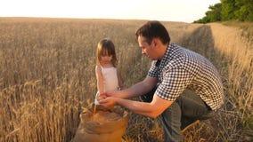 O paizinho é um agrônomo e a criança pequena está jogando com grão em um saco no campo de trigo o fazendeiro do pai joga com pouc filme