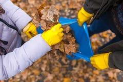 O paizinho mantém o saco de lixo e a filha coloca as folhas no pacote Vista de acima fotos de stock royalty free