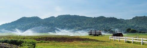 O panorama da exploração agrícola do milho é alimentado pelo pulverizador de água Imagens de Stock Royalty Free