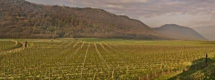 O panorama dos vinhedos coloca a vista em Itália Fotos de Stock Royalty Free