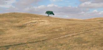 O panorama minimalista de um campo arado montanhoso do rolamento com o carvalho solitário da cortiça do súber, súber do Quercus,  foto de stock