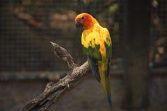 O papagaio bonito na madeira imagem de stock