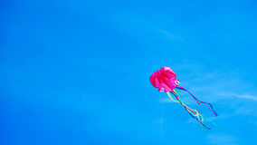 O papagaio gosta do voo do polvo no céu azul imagens de stock royalty free