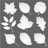 O papel do corte do branco de Eco sae da coleção Ilustração do vetor Fotos de Stock Royalty Free