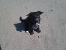 O pappie preto bonito olha acima a praia da areia do beutifull Fotos de Stock Royalty Free