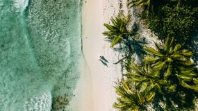 O par anda na praia entre o oceano e as palmeiras fotografia de stock royalty free