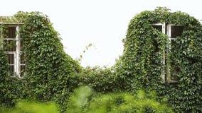 O par feliz do recém-casado está abrindo a janela da casa velha coberta com as ervas e está mostrando seus dedos com casamento vídeos de arquivo