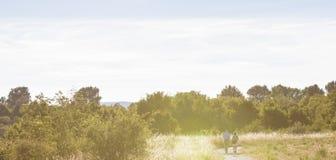 O par toma uma caminhada na natureza que cerca em um dia ensolarado de ardência Imagens de Stock Royalty Free