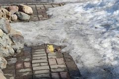O pardal come grões em pavimentos em um dia de mola ensolarado fotografia de stock royalty free