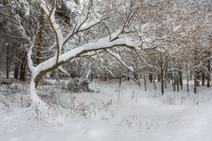 O parque é após uma tempestade de neve pesada fotos de stock royalty free