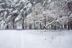 O parque é após uma tempestade de neve pesada imagens de stock royalty free