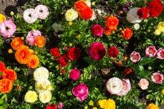 O parque alaranjado branco roxo amarelo colorido bonito floresce Garde Fotos de Stock Royalty Free