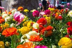 O parque alaranjado branco roxo amarelo colorido bonito floresce Garde Fotografia de Stock