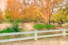 O parque bonito do verão Imagens de Stock
