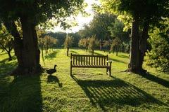 O parque com um vinhedo imagem de stock royalty free