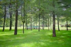 O parque da cidade é uma imagem infravermelha da cor imagens de stock
