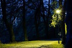 O parque da cidade no cenário da noite com um lugar para descansar a paisagem da cidade da noite estaciona na primavera Bancos, t imagem de stock royalty free