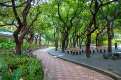O parque da passagem com arbustos e gramados verdes, Fotos de Stock