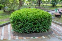 O parque da passagem com arbustos e gramados verdes, Fotografia de Stock Royalty Free