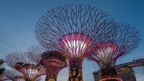 o parque da Super-árvore é marco Singapura na noite a arquitetura da cidade é mostra colorida à iluminação em Marina Bay Sand Foto de Stock
