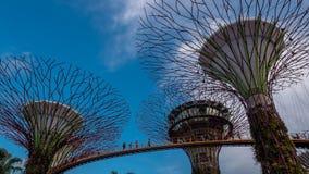 o parque da Super-árvore é marco Singapura no dia a arquitetura da cidade é mostra colorida à iluminação em Marina Bay Sand Foto de Stock Royalty Free