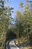 O parque de bambu Foto de Stock Royalty Free