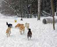 O parque do cão fotografia de stock royalty free