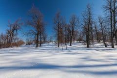 O parque do inverno com neve Imagem de Stock Royalty Free