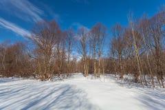 O parque do inverno com neve e sombras Imagens de Stock Royalty Free