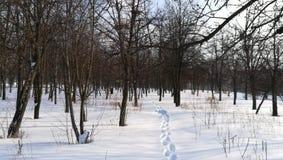 O parque do inverno começa dentro da mola com o muitos neva Fotografia de Stock Royalty Free