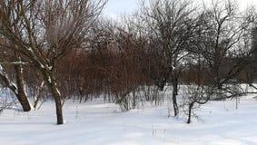 O parque do inverno começa dentro da mola com o muitos neva imagens de stock