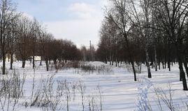 O parque do inverno começa dentro da mola com o muitos neva e muitas árvores foto de stock royalty free