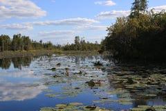 O parque do pântano de Okefenokee transporta-o imediatamente em um ambiente pré-histórico, povoado pelo †de vida dos dinossauro imagens de stock royalty free