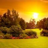 O parque do verão com canteiros de flores bonitos e o sol aumentam Imagem de Stock Royalty Free