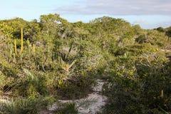 O parque estadual da costela faz o solenoide em Rio de janeiro Imagem de Stock