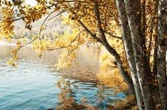 O parque faz o fundo do caminho, Portugal Imagem de Stock Royalty Free
