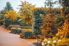 O parque jardina outono do verão dos arbustos das árvores fotografia de stock