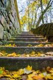 O parque no outono Imagens de Stock