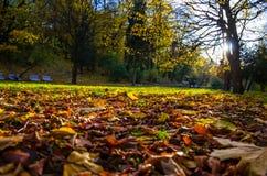 O parque no outono Fotografia de Stock Royalty Free